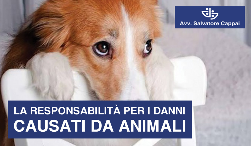 DANNI CAUSATI DA UN ANIMALE