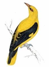 Spumarche - Mixologia - The Oriole - Yellow bird - Smithfield Markets