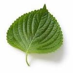 Spumarche - Perilla  Perilla frutescens - detta anche shiso o egoma,