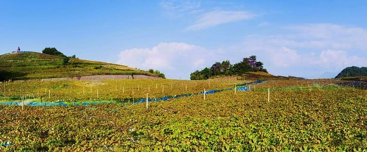 Spumarche - vino - KOJ - Koshu- Japan