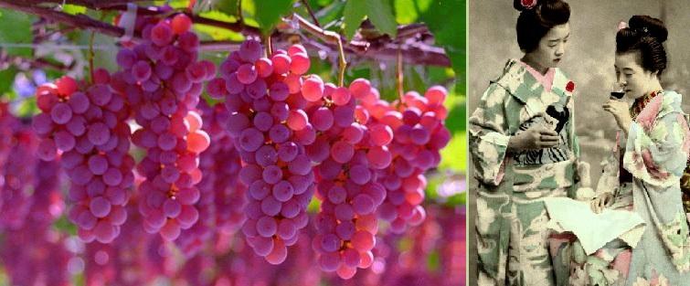 Spumarche - Vino e Dintorni - Koshu wine - Giappone - KOJ -