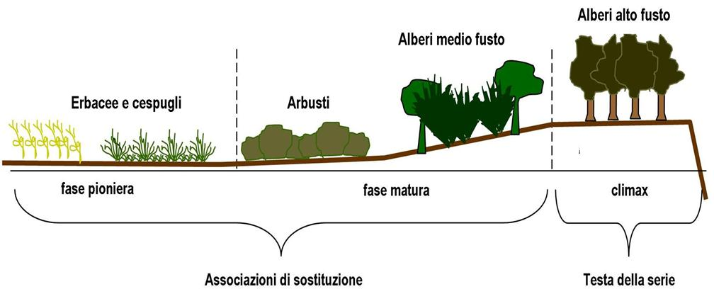 Associazioni fitosociologiche