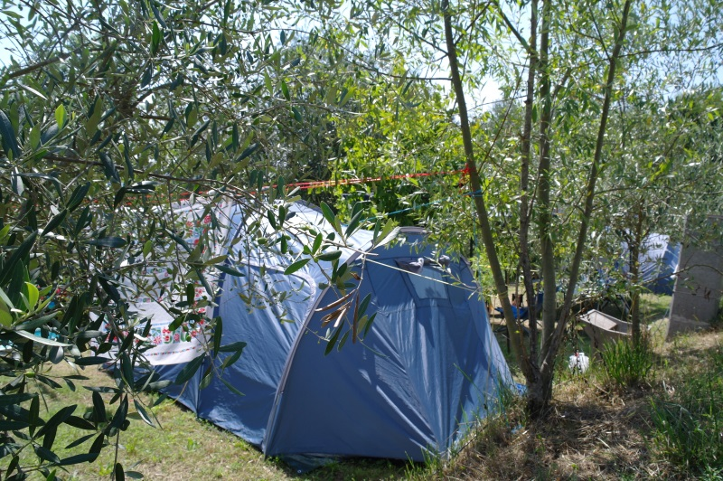 Tent with Olive Trees
