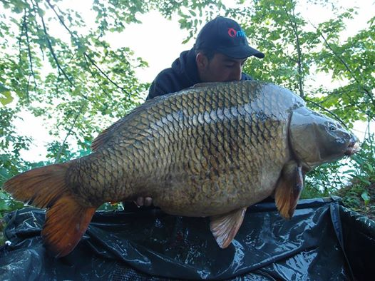 onfish carpa boilies team