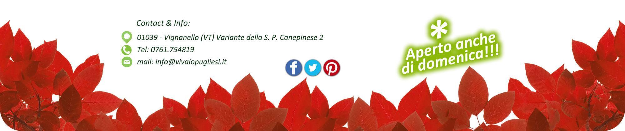 www.vivaiopugliesi.it