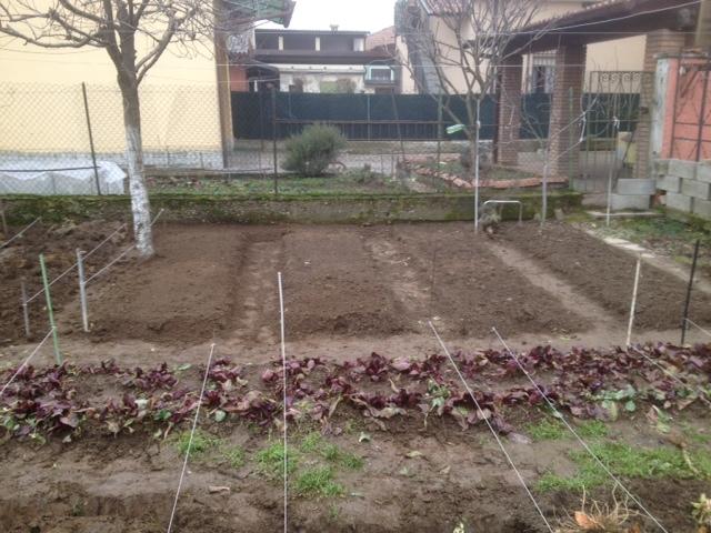 Coltiviamo l 39 orto - Cimice del pomodoro ...