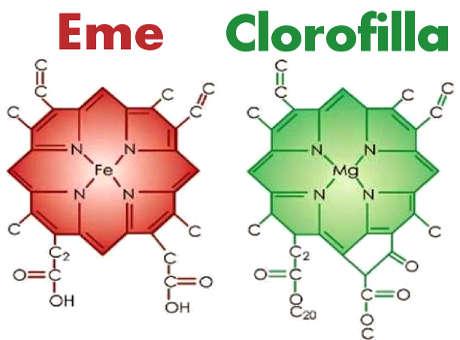 gruppo eme simile clorofilla