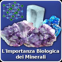 minerali importanti organismo
