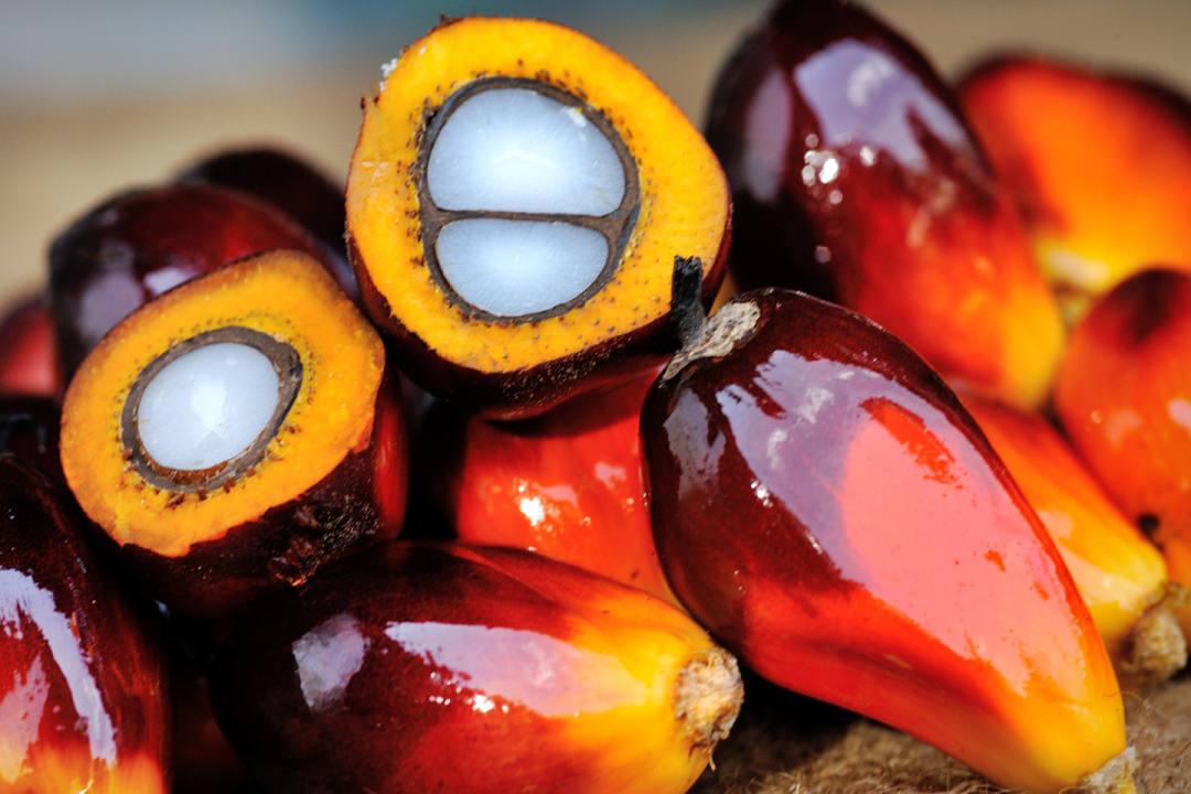 olio palma palmisto frutto palma nocivo diabete male velenoso cancerogeno tossico cattivo