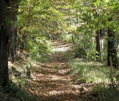 strada meno battuta del bosco