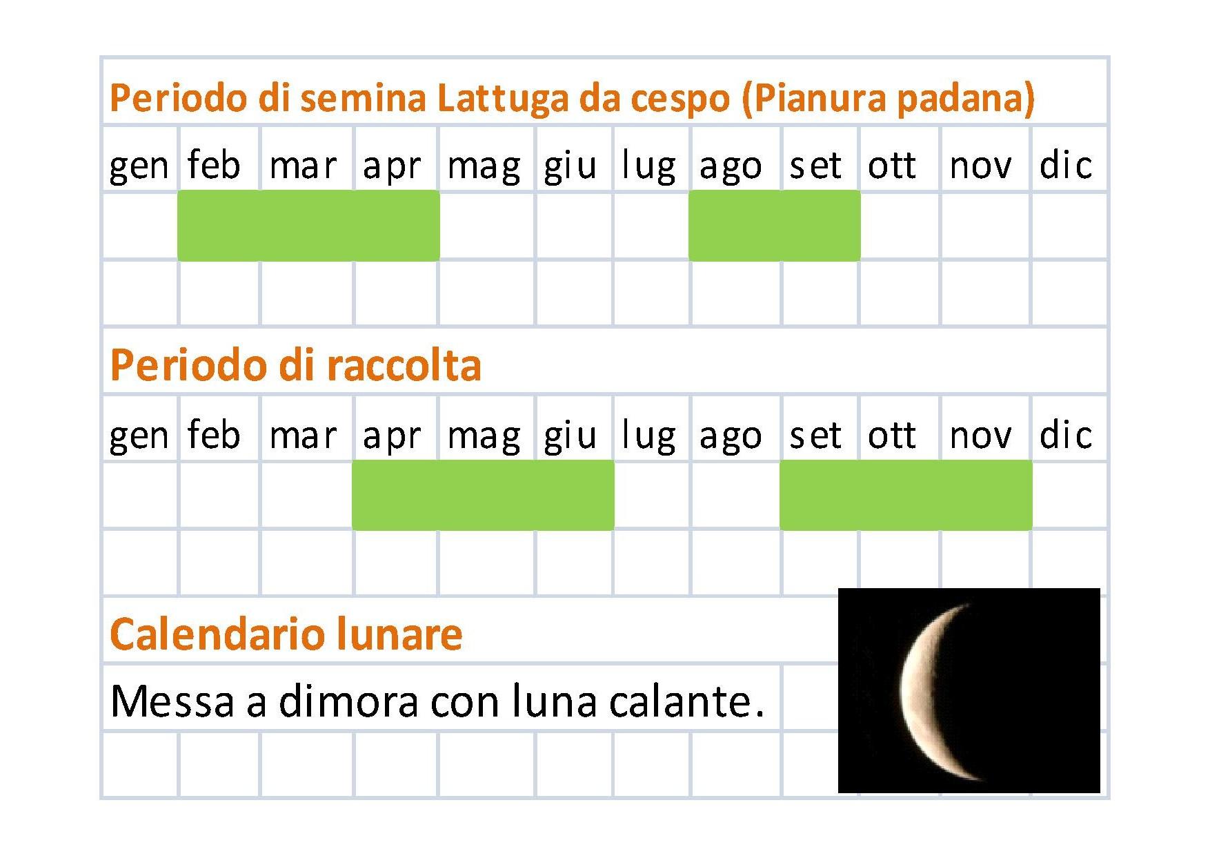 Calendario Di Semina.Come Coltivare La Lattuga Da Cespo