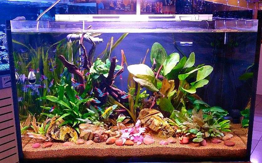 Acquari for Neon pesci prezzo