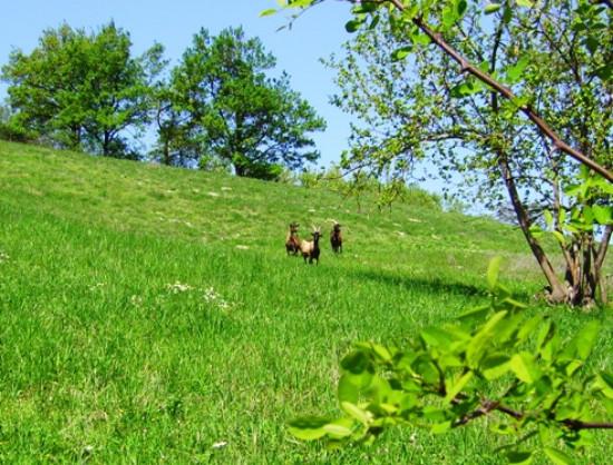Fattoria i grat r allevamento capre for Planimetrie rustiche della fattoria