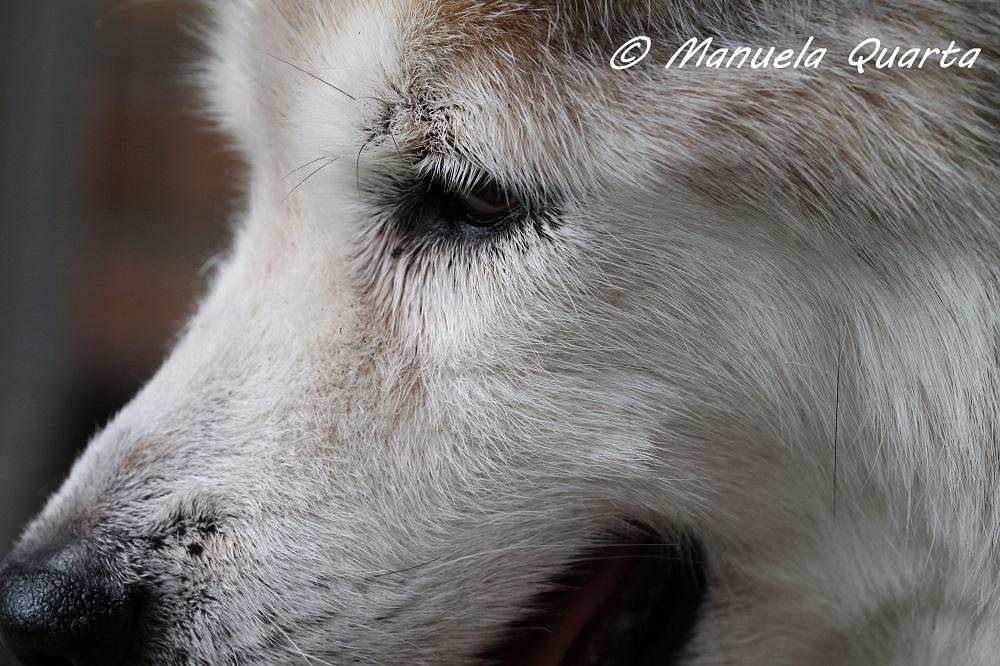 Educazione cinofila serenamente cane for Educazione cane