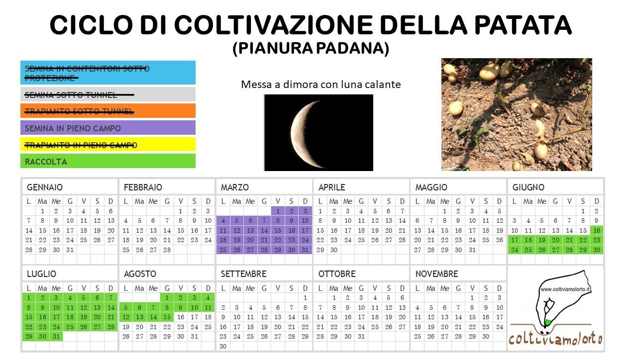 Calendario Delle Semine Pdf.Come Coltivare La Patata