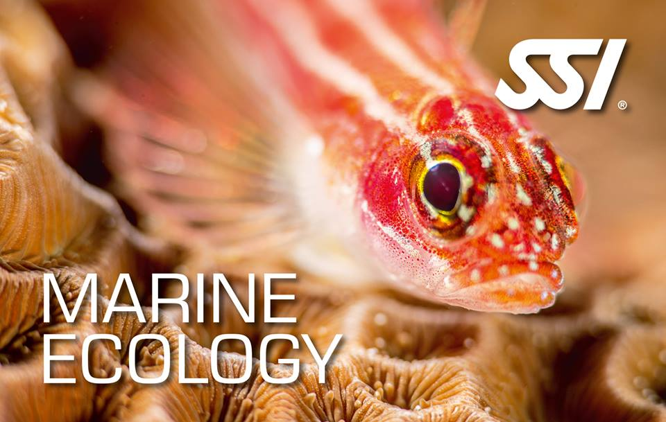 Free Marine Ecology Course 2021 for all our divers...