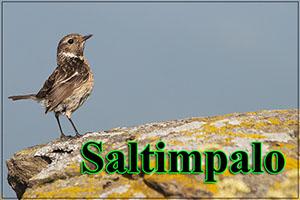 Saltimpalo-anteprimajpg