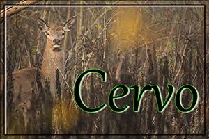 cervo-anteprimajpg