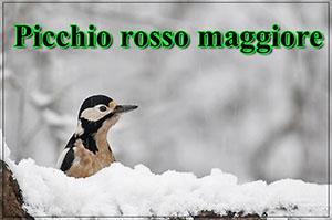 Picchio-r-mag-anteprimajpg