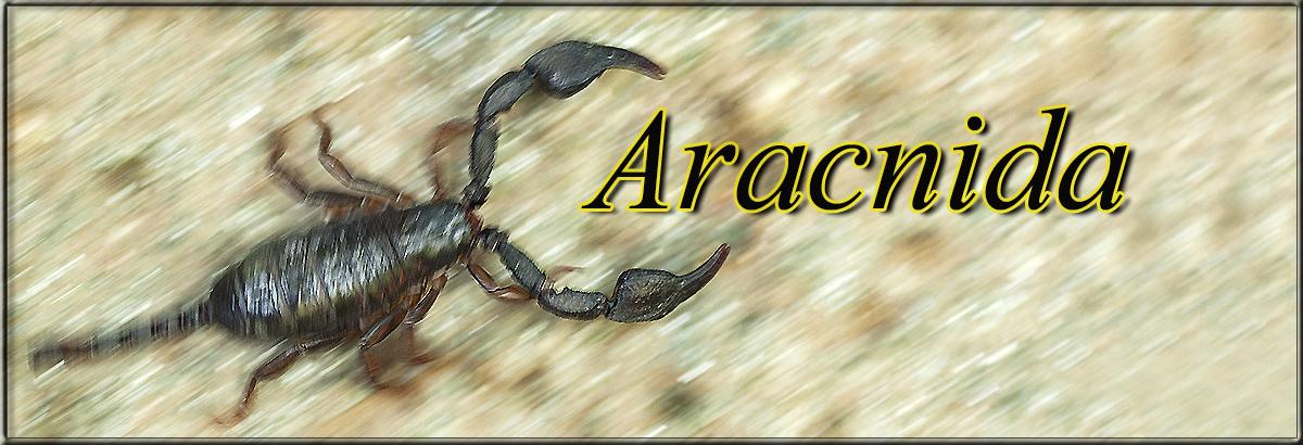 Aracnidajpg