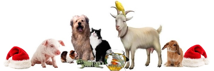 animali-amici-gruppojpg