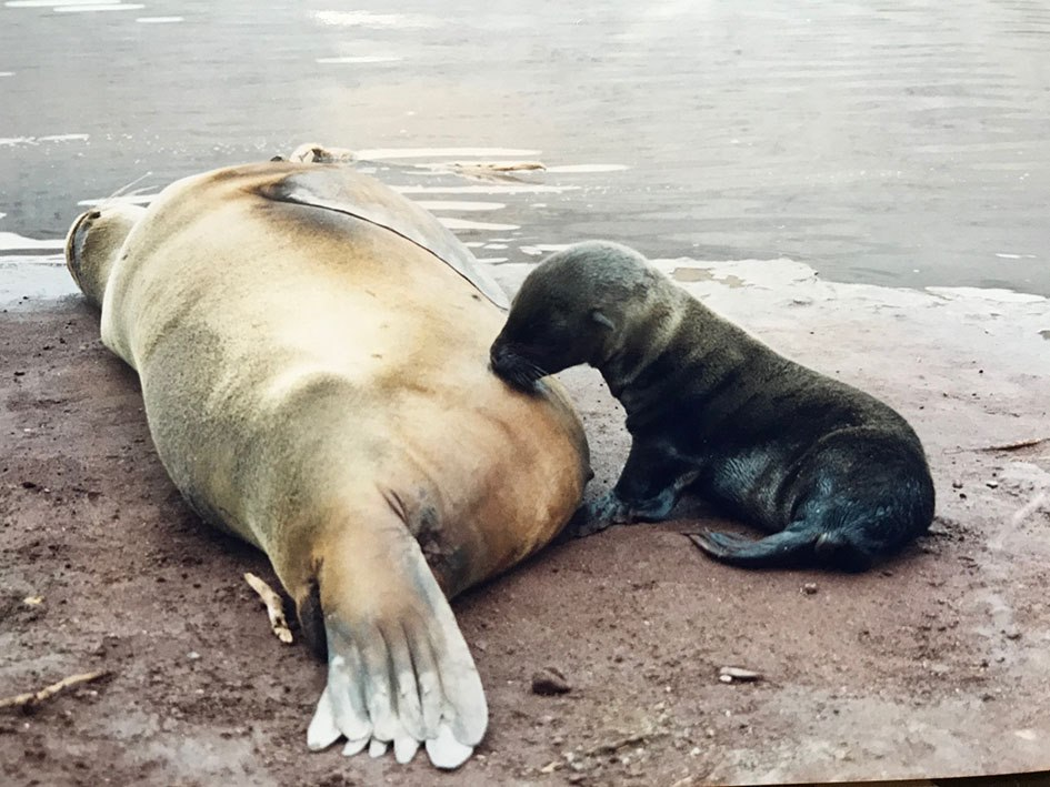 Isola rabida mamma e cucciolojpg