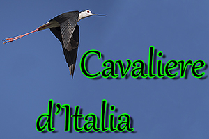Cavaliere Italia-anteprimajpg