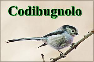 Codibugnolo-anteprimajpg