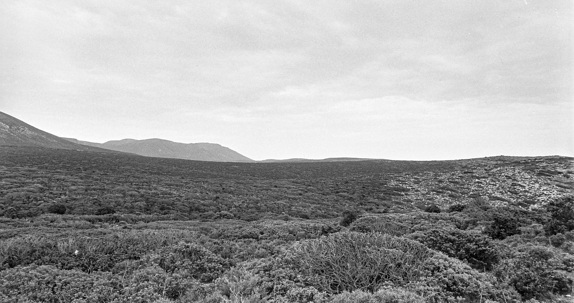 Laltopiano di Planu Sartu unenorme distesa di macchia mediterranea Fino a met Ottocento era una foresta JPG