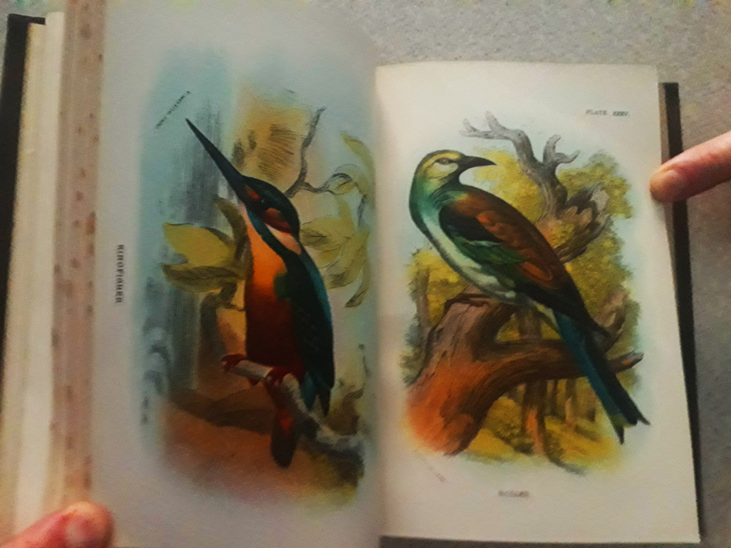 Birds of Great Britain vol. II - 1896 - 27 Chromolito originali Chromolito originali