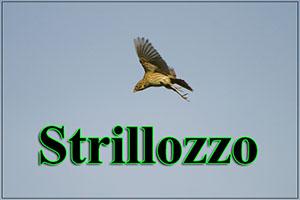 Strillozzo-anteprimajpg