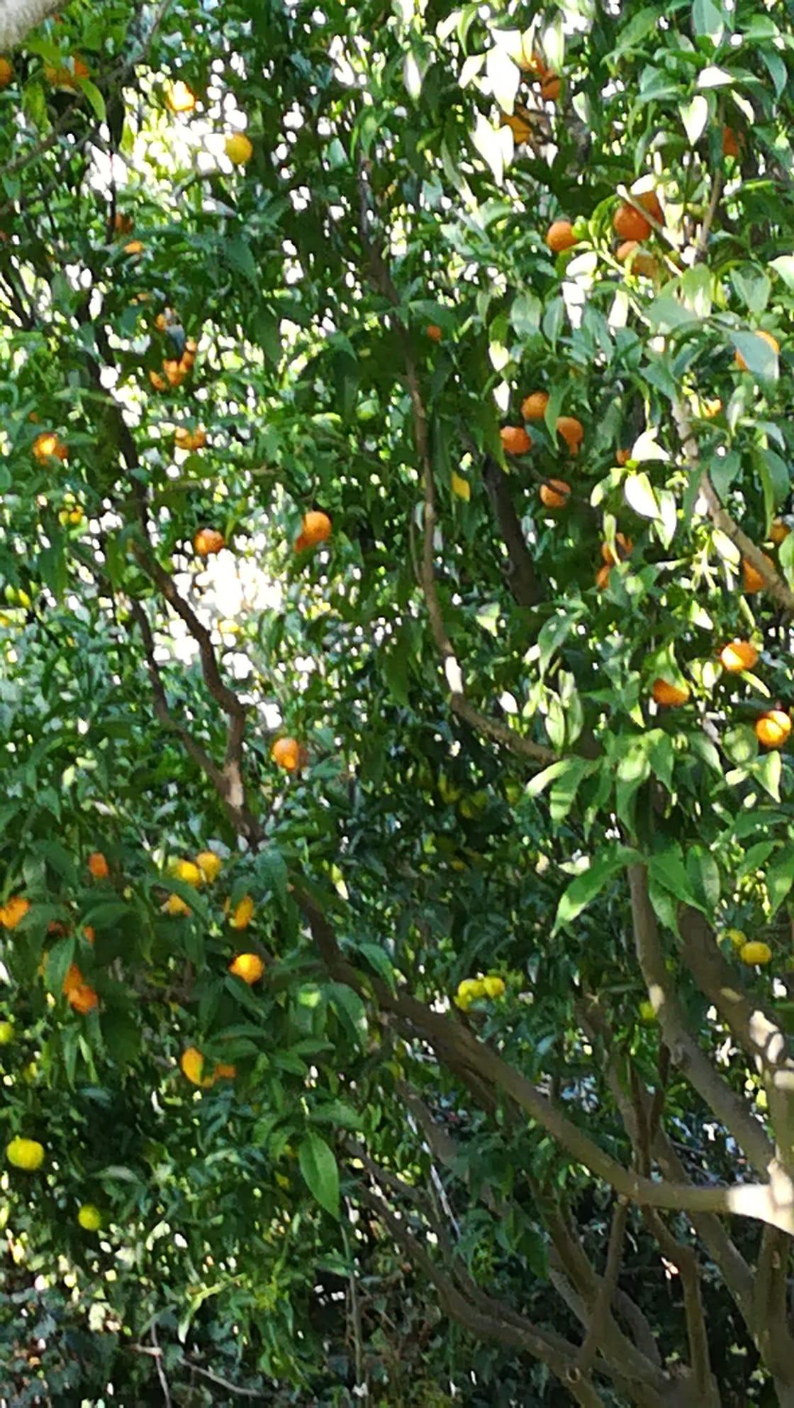 6fruttijpeg
