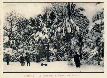 1891flooridianaJPG