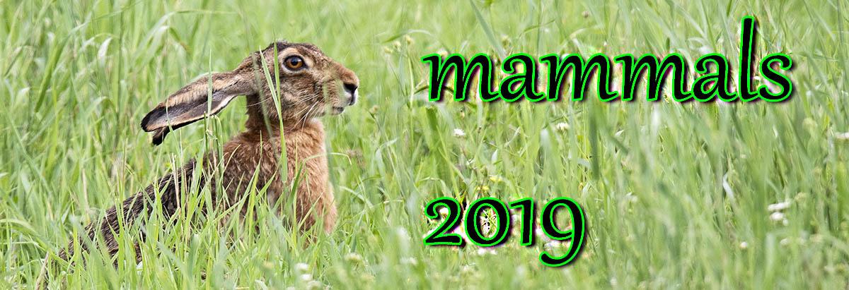amb 2019 mammalsjpg