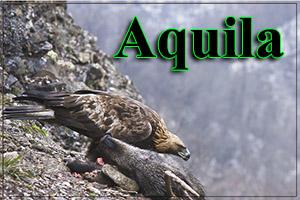 Aquila-anteprimajpg