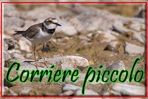 corrierepiccolo-anteprimajpg