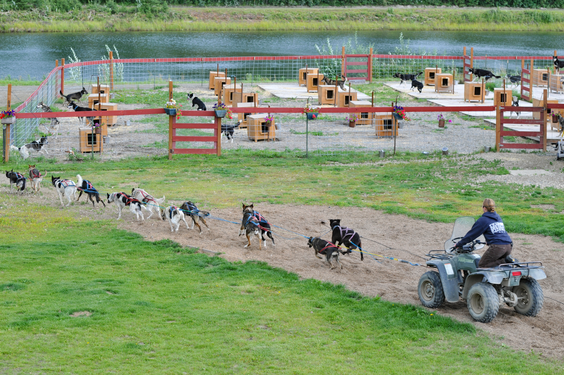09-Iditarod-Traing-Fairbanksjpg