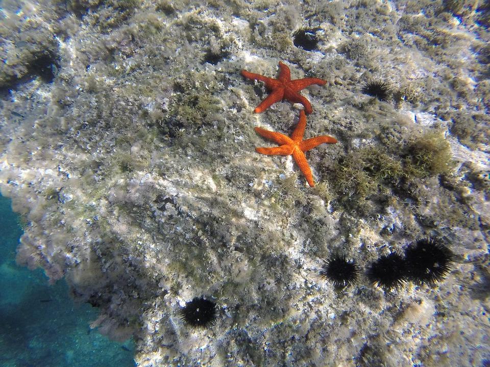 starfish-934823_960_720jpg