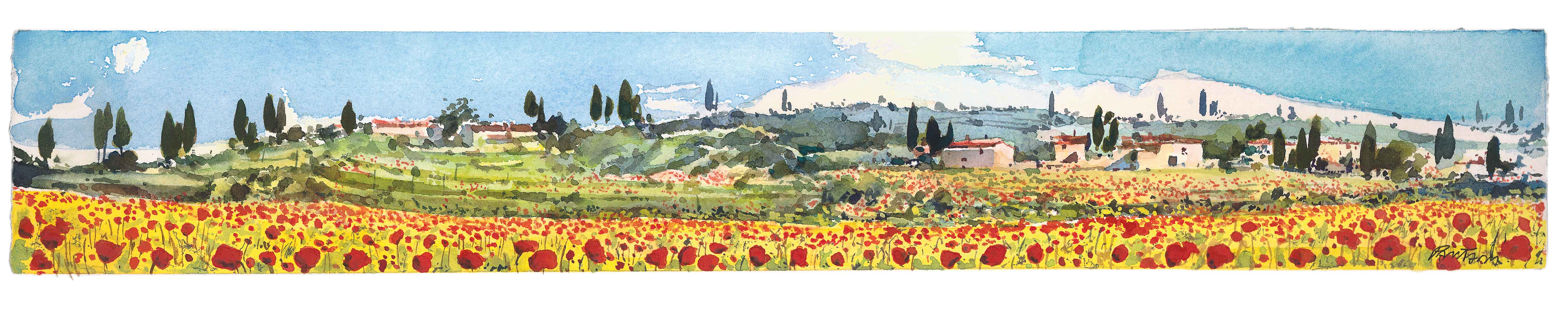 Papaveri in toscana, toscana poppies