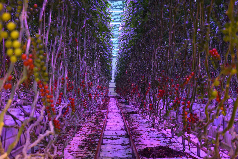Illuminazione led per coltivazione