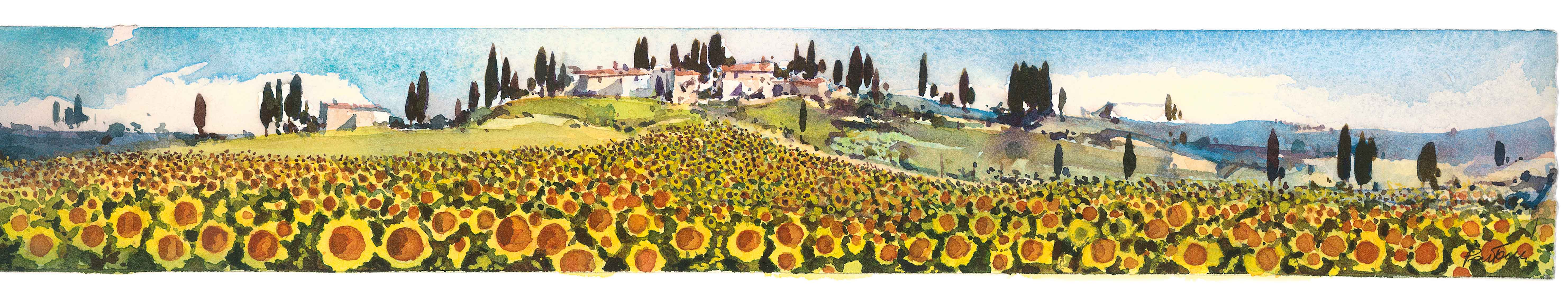 Girasoli in toscana, toscana sunflowers