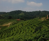 collina verdepng