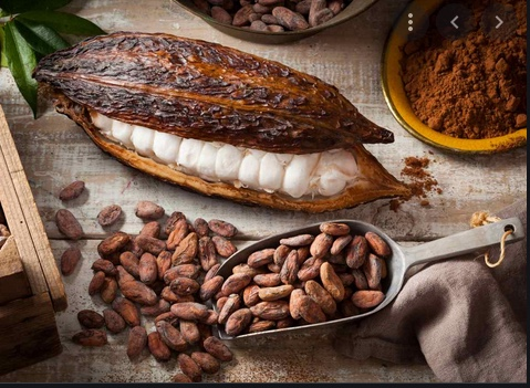 Cacao meravigliaojpeg