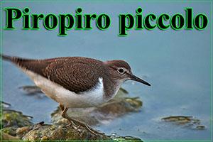 piropiropiccolo-anteprimajpg
