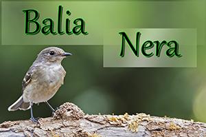 Balia-n-anteprimajpg