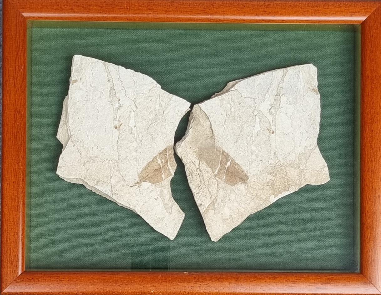 Fossile Palenajpg