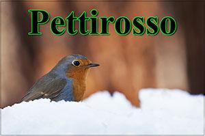 Pettirosso-anteprimajpg