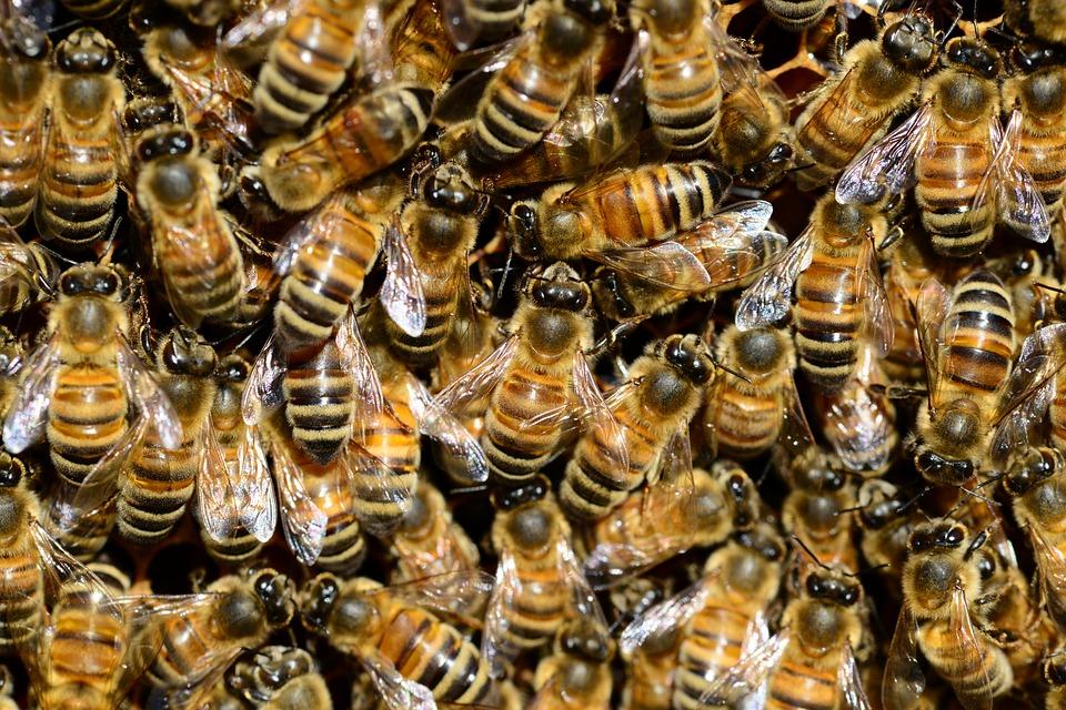 bees-292132_960_720jpg