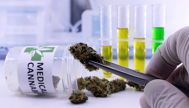 unc-cannabis-research-projectsjpg