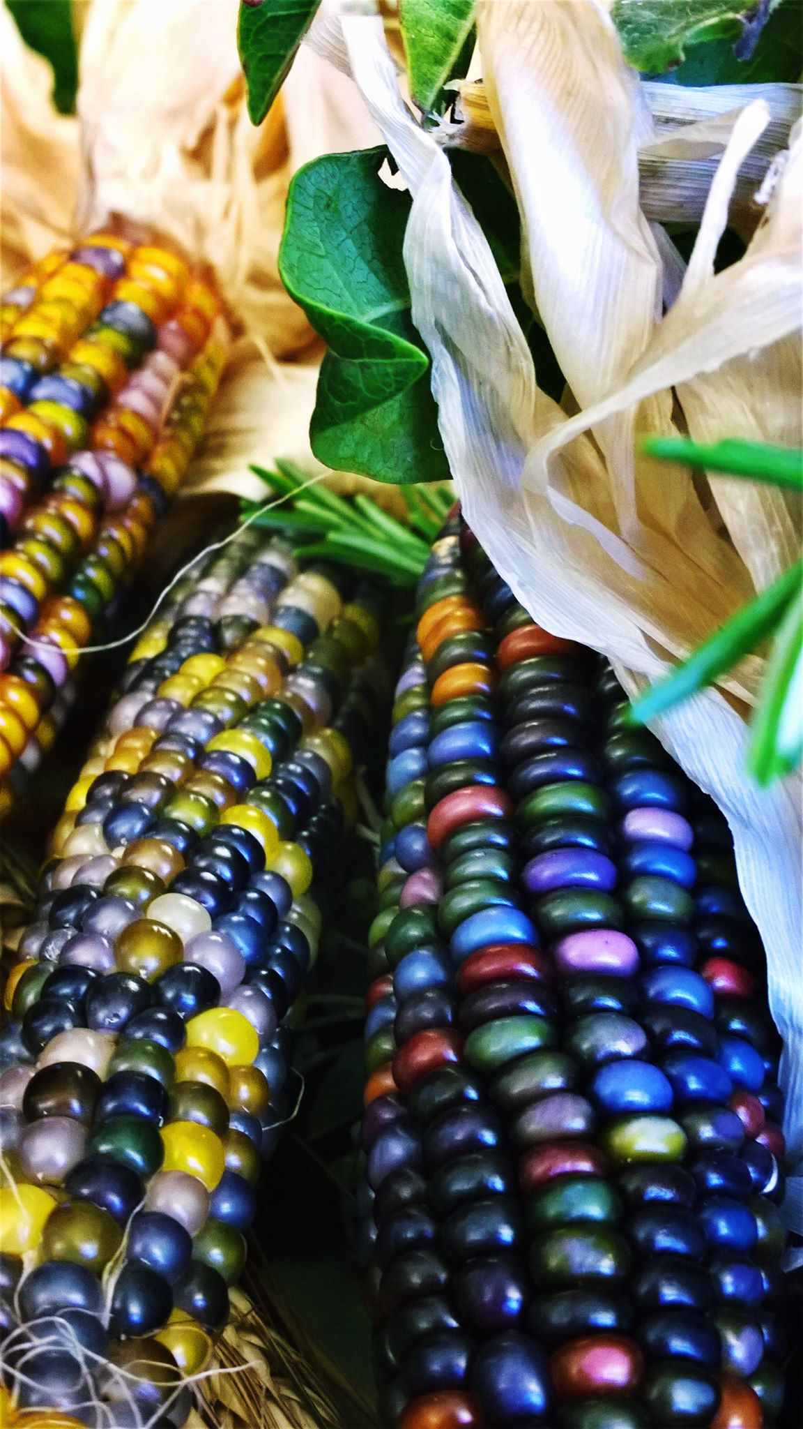 Mais Glass Gem Corn